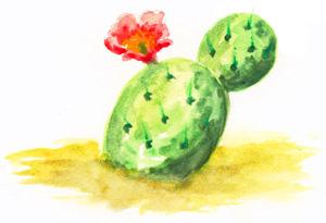 cactus1 lr